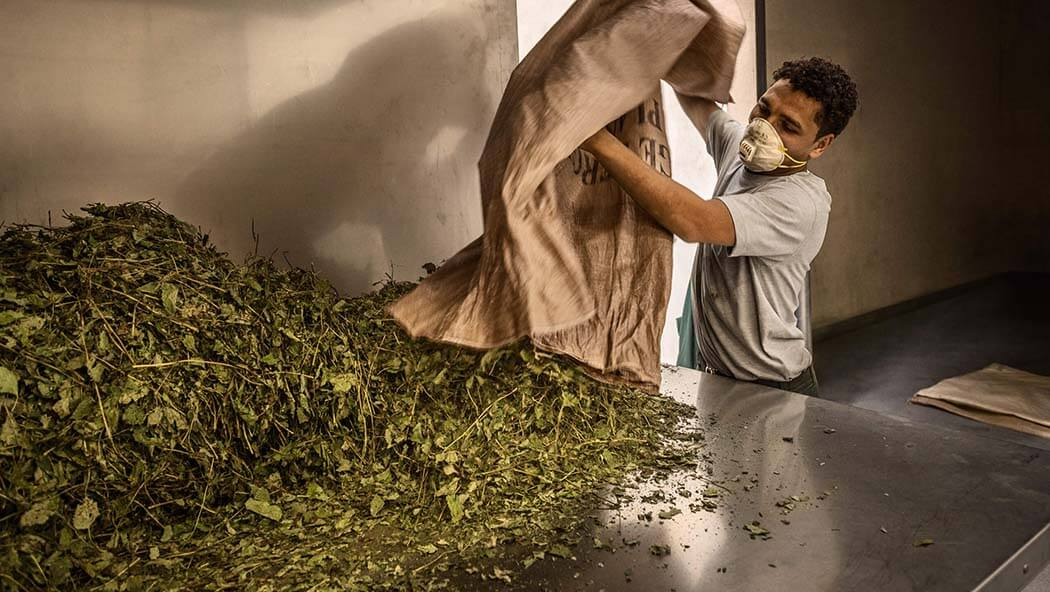 Processing the herbs