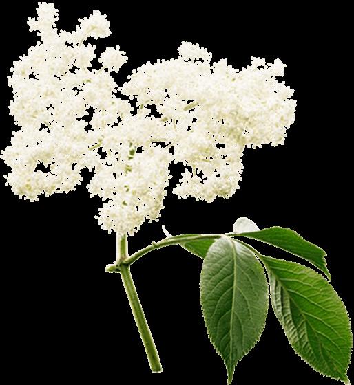 Svarthyll
