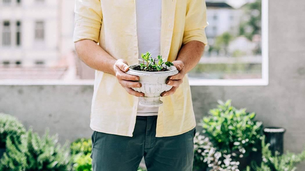 Repot herbs