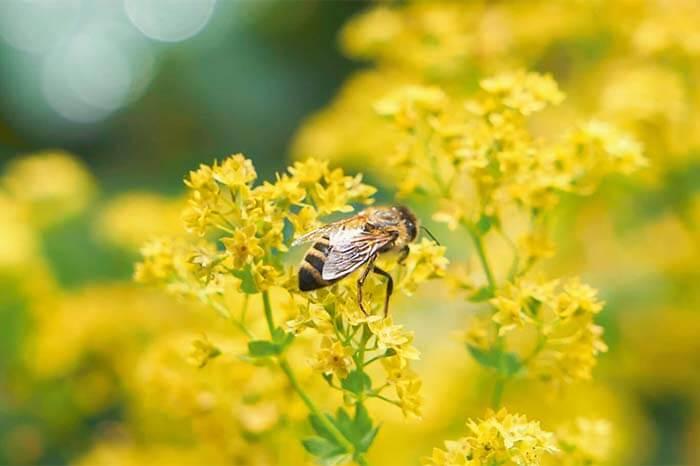 Wir lieben Bienen