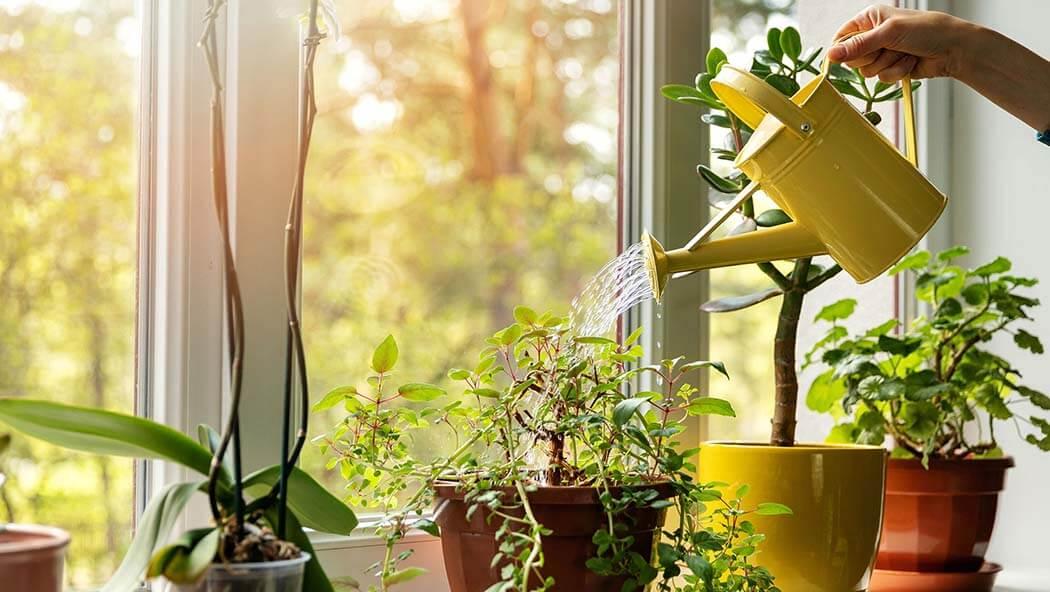 ¿Qué plantas incorporar en el día a día?